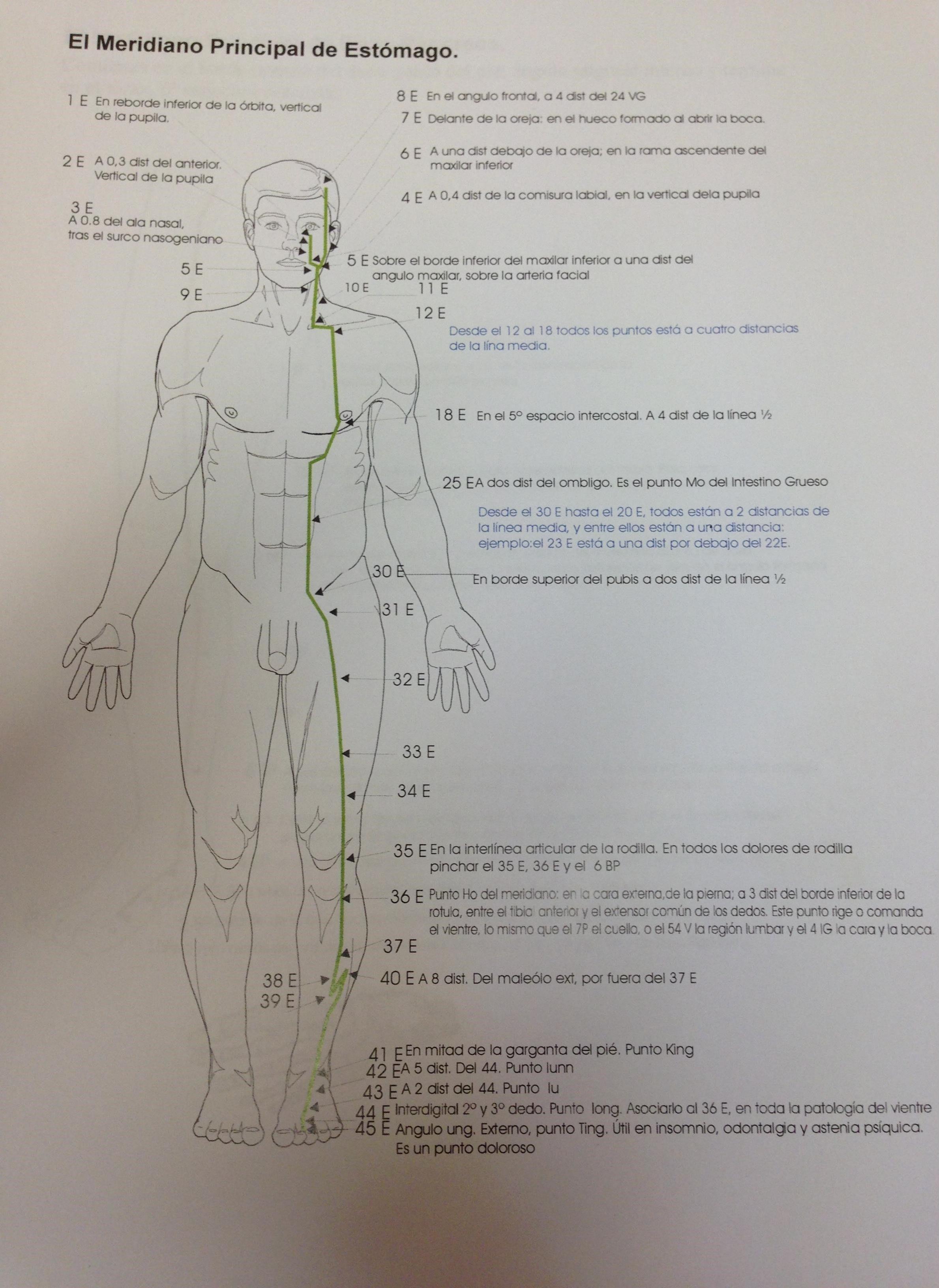 Principios básicos de la acupuntura, 3º parte - Publicaciones ...